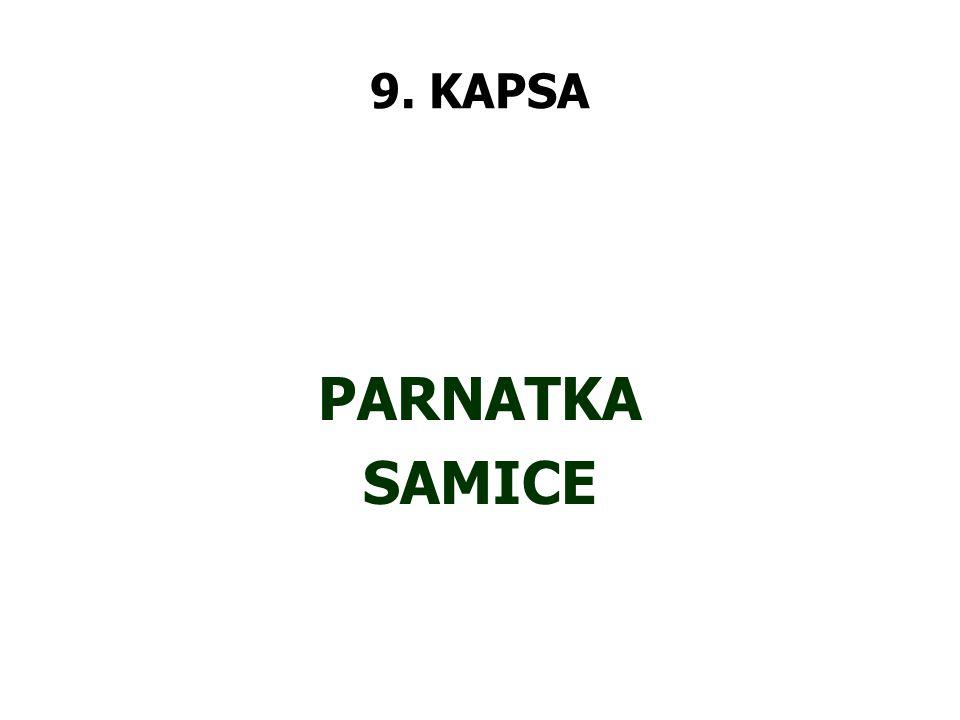 9. KAPSA PARNATKA SAMICE