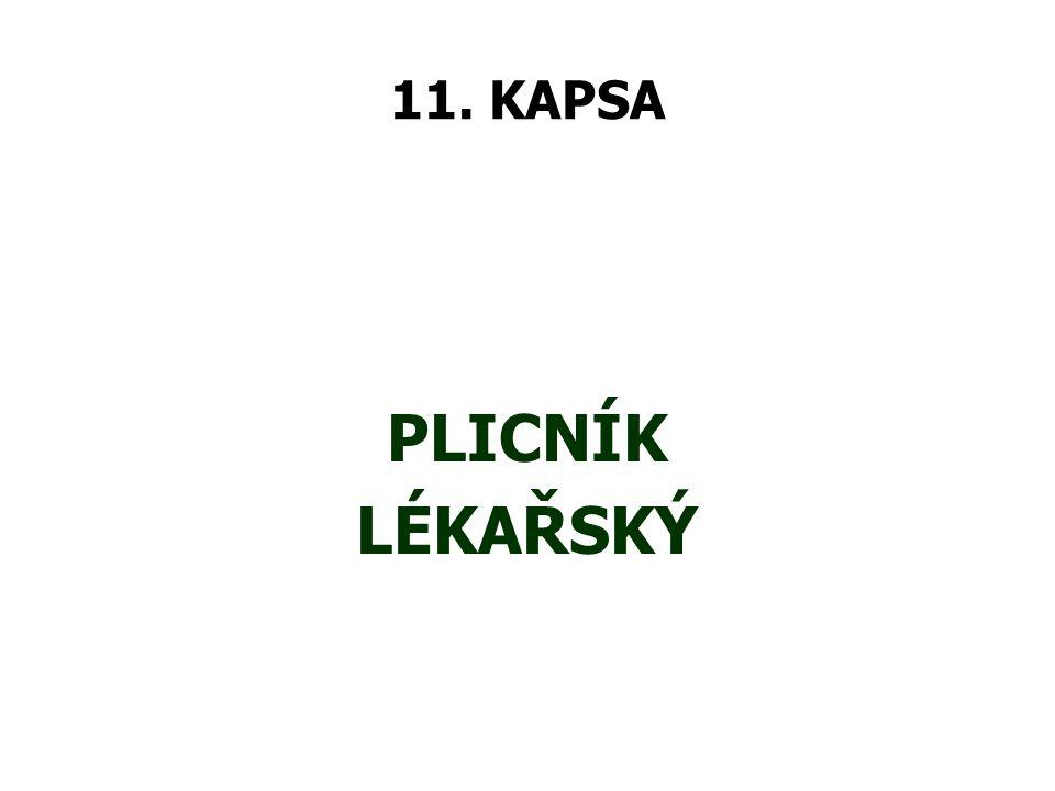 11. KAPSA PLICNÍK LÉKAŘSKÝ