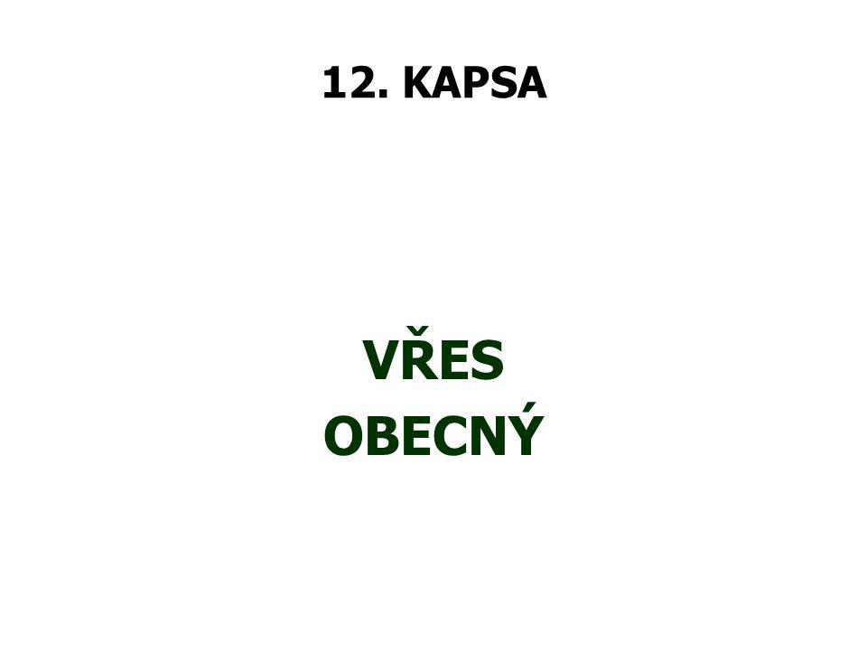 12. KAPSA VŘES OBECNÝ