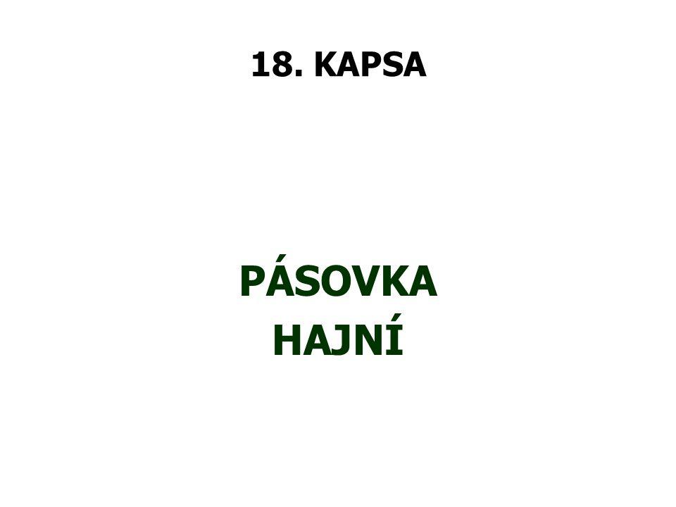 18. KAPSA PÁSOVKA HAJNÍ