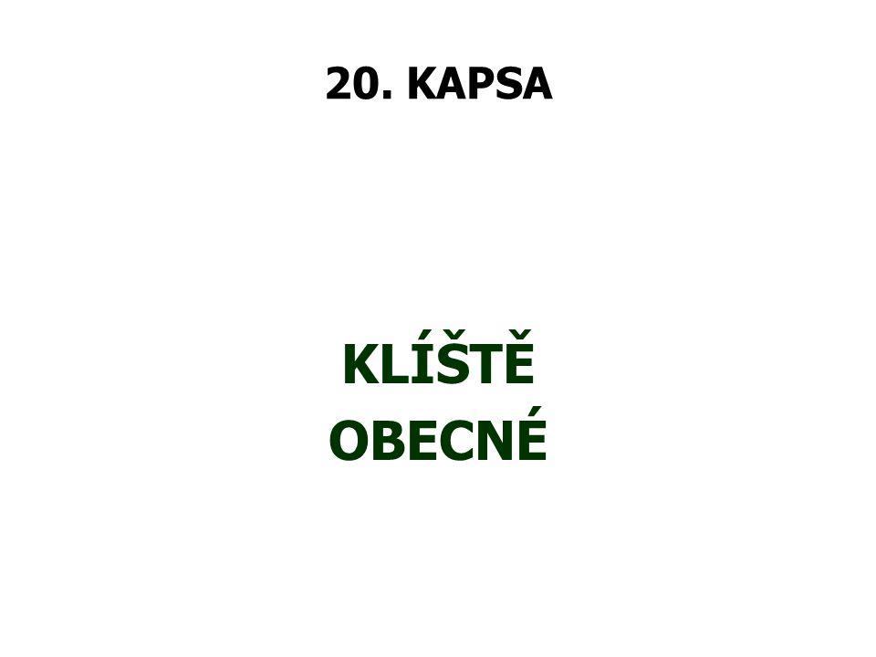 20. KAPSA KLÍŠTĚ OBECNÉ