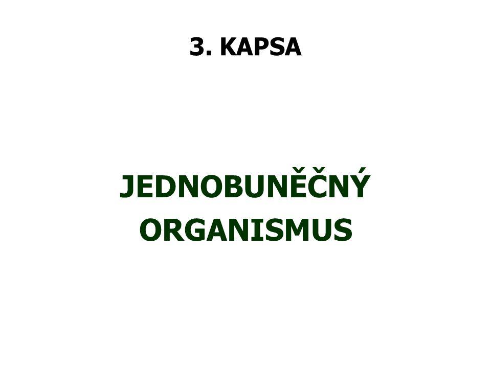 JEDNOBUNĚČNÝ ORGANISMUS