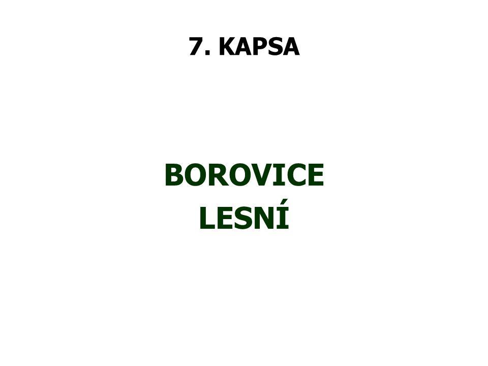 7. KAPSA BOROVICE LESNÍ