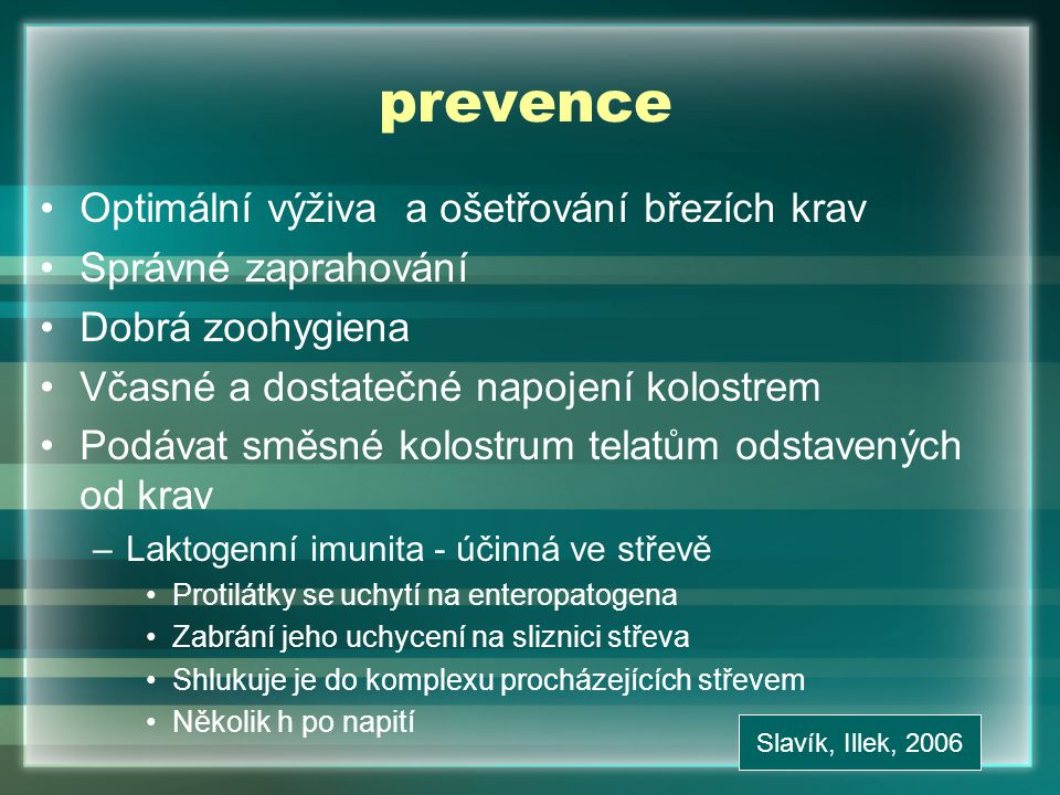 prevence Optimální výživa a ošetřování březích krav