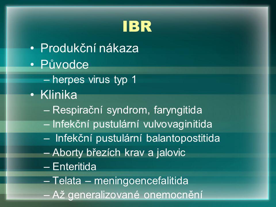 IBR Produkční nákaza Původce Klinika herpes virus typ 1