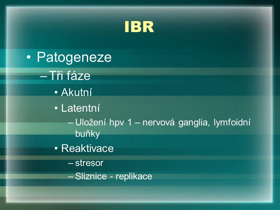 IBR Patogeneze Tři fáze Akutní Latentní Reaktivace