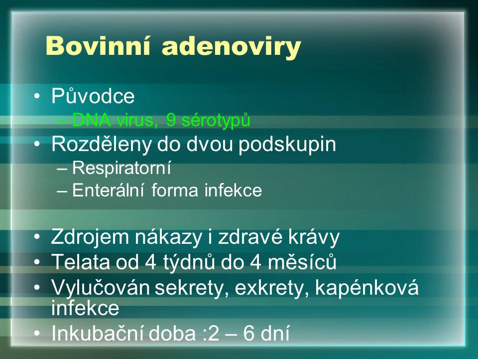 Bovinní adenoviry Původce Rozděleny do dvou podskupin
