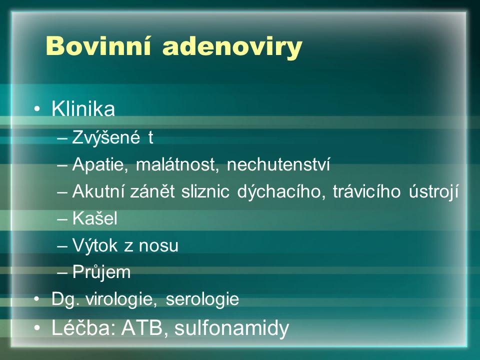 Bovinní adenoviry Klinika Léčba: ATB, sulfonamidy Zvýšené t