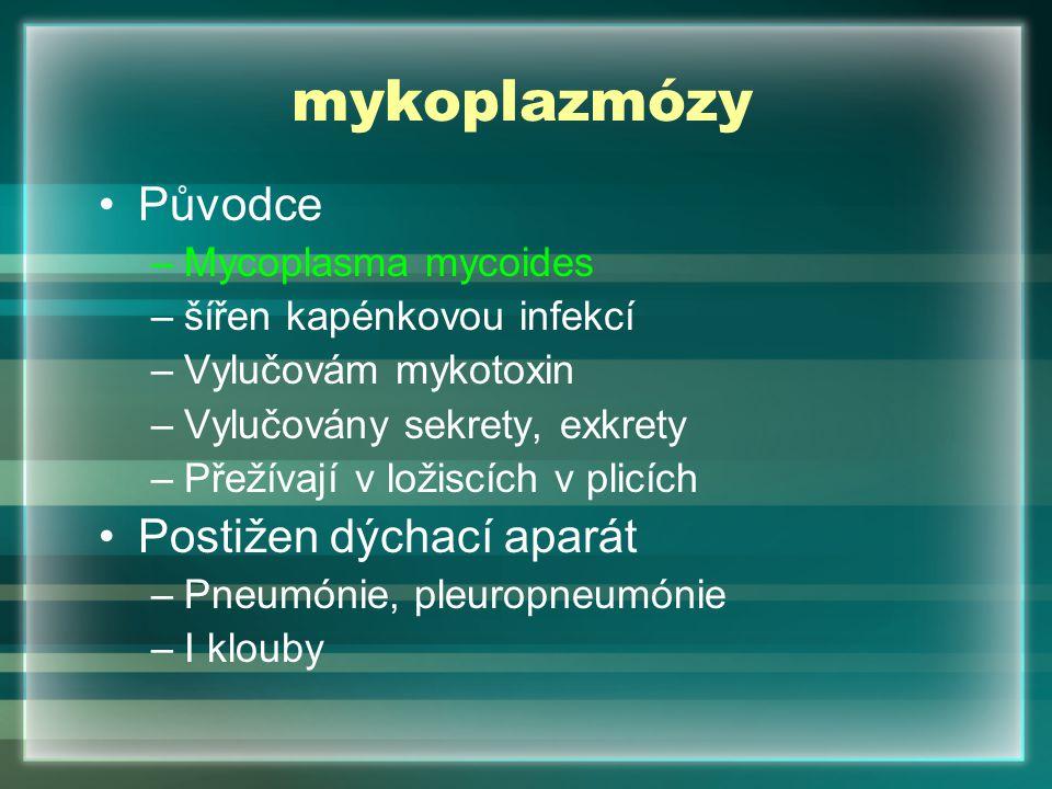 mykoplazmózy Původce Postižen dýchací aparát Mycoplasma mycoides