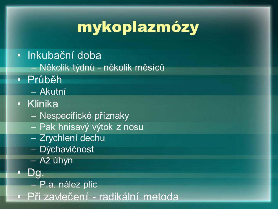 mykoplazmózy Inkubační doba Průběh Klinika Dg.
