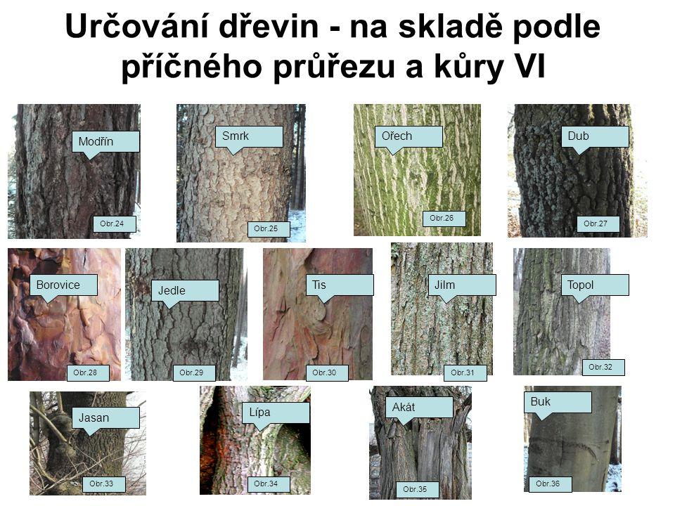 Určování dřevin - na skladě podle příčného průřezu a kůry VI