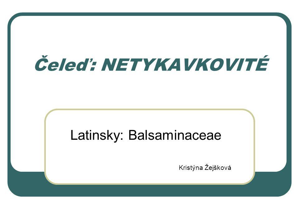 Latinsky: Balsaminaceae Kristýna Žejšková