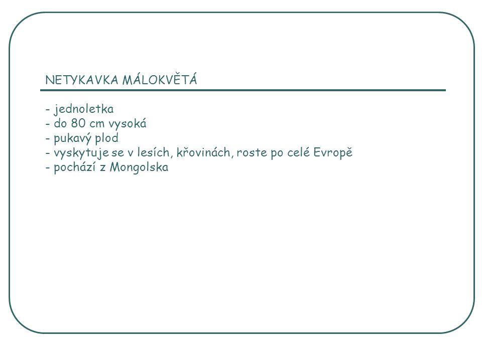 NETYKAVKA MÁLOKVĚTÁ - jednoletka - do 80 cm vysoká - pukavý plod - vyskytuje se v lesích, křovinách, roste po celé Evropě - pochází z Mongolska