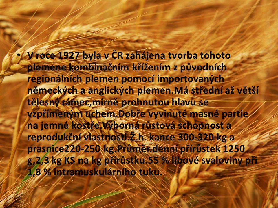 V roce 1927 byla v ČR zahájena tvorba tohoto plemene kombinačním křížením z původních regionálních plemen pomocí importovaných německých a anglických plemen.Má střední až větší tělesný rámec,mírně prohnutou hlavu se vzpřímeným uchem.Dobře vyvinuté masné partie na jemné kostře.Výborná růstová schopnost a reprodukční vlastnosti.Ž.h.