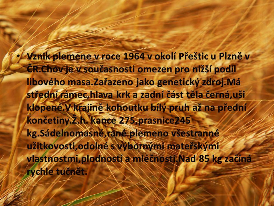 Vznik plemene v roce 1964 v okolí Přeštic u Plzně v ČR