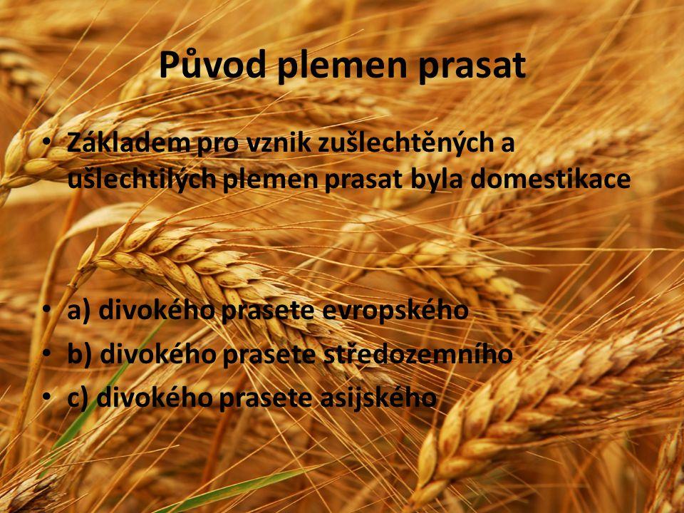 Původ plemen prasat Základem pro vznik zušlechtěných a ušlechtilých plemen prasat byla domestikace.
