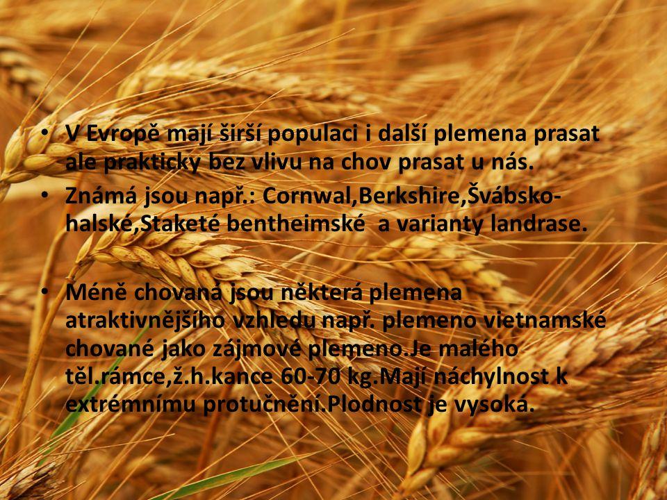 V Evropě mají širší populaci i další plemena prasat ale prakticky bez vlivu na chov prasat u nás.