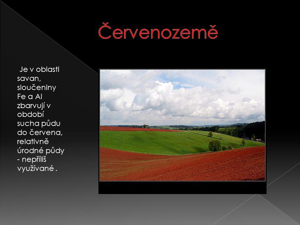 Červenozemě Je v oblasti savan, sloučeniny Fe a Al zbarvují v období sucha půdu do červena, relativně úrodné půdy - nepříliš využívané .