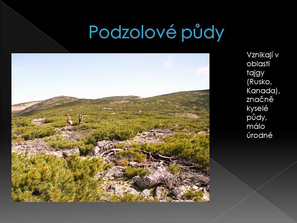 Podzolové půdy Vznikají v oblasti tajgy (Rusko, Kanada), značně kyselé půdy, málo úrodné