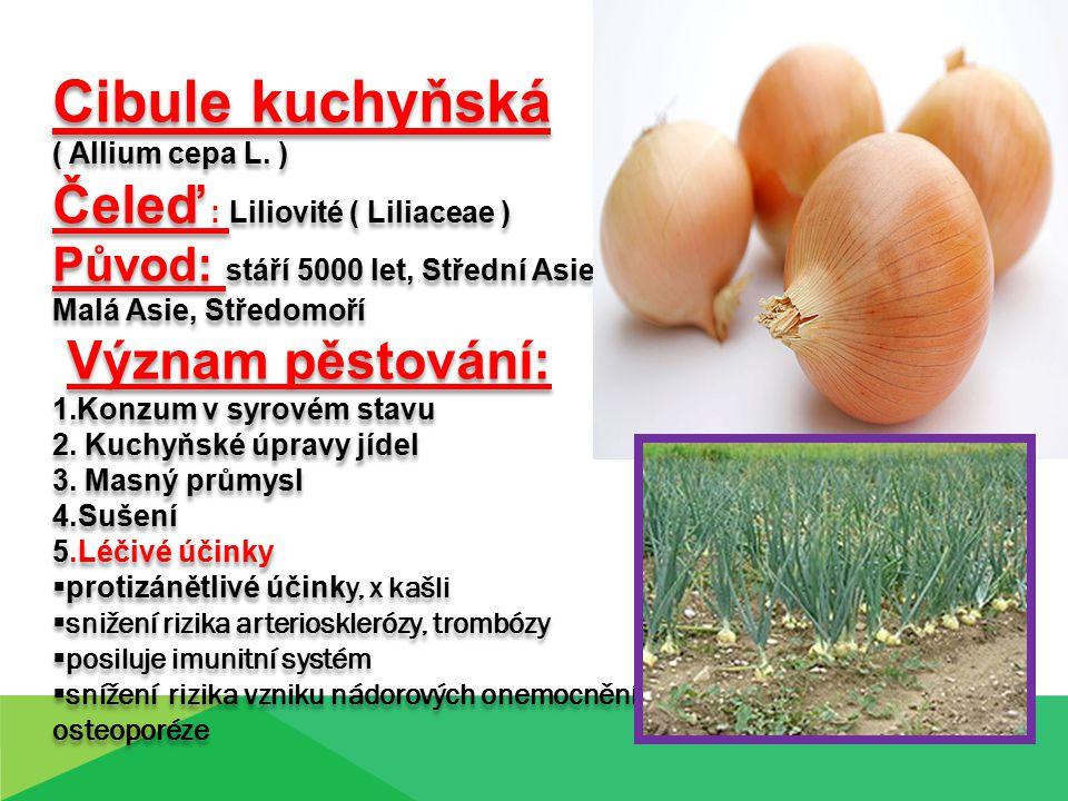 Cibule kuchyňská Čeleď : Liliovité ( Liliaceae ) Význam pěstování: