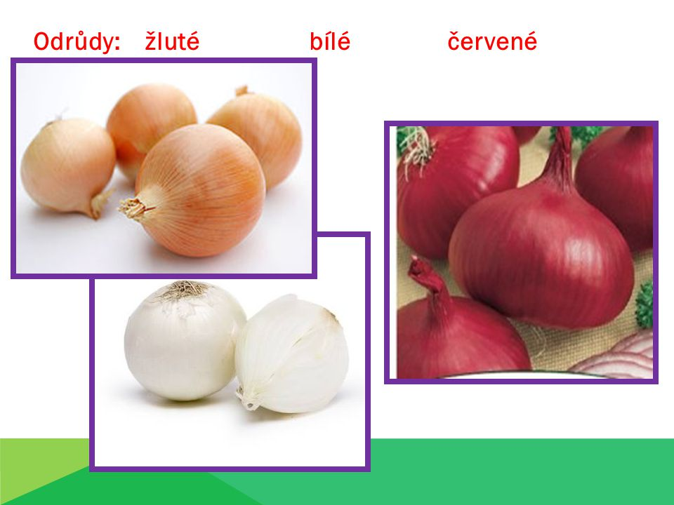 Odrůdy: žluté bílé červené