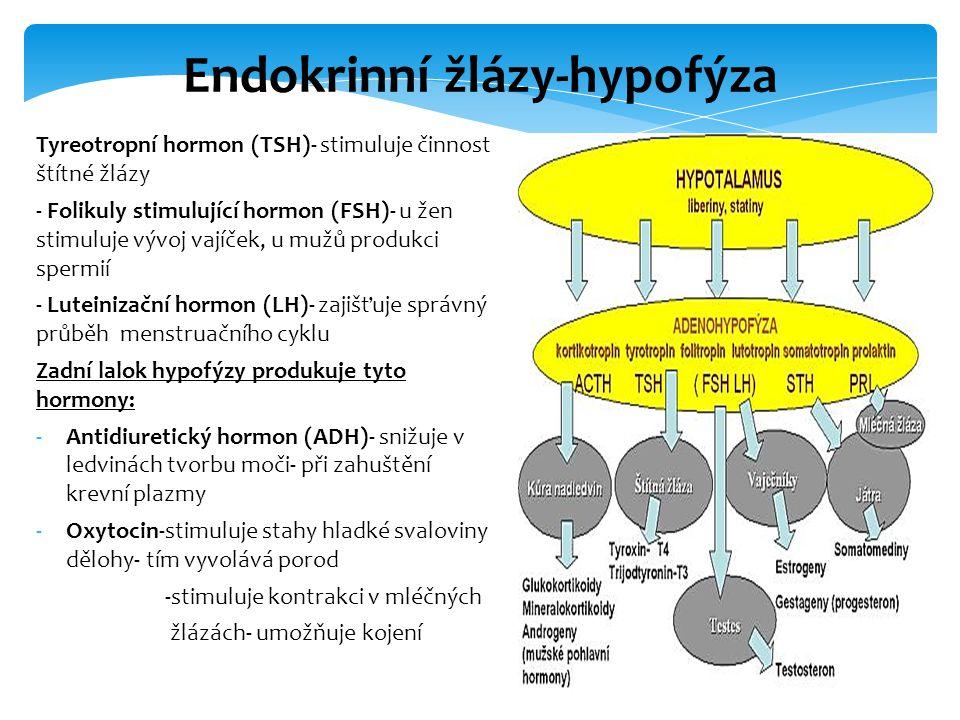 Endokrinní žlázy-hypofýza