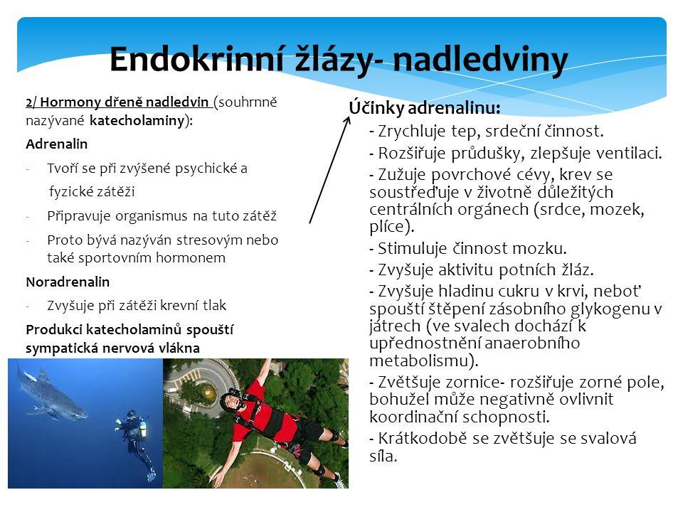 Endokrinní žlázy- nadledviny