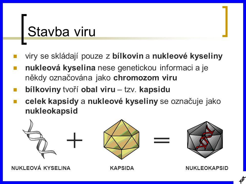 Stavba viru viry se skládají pouze z bílkovin a nukleové kyseliny