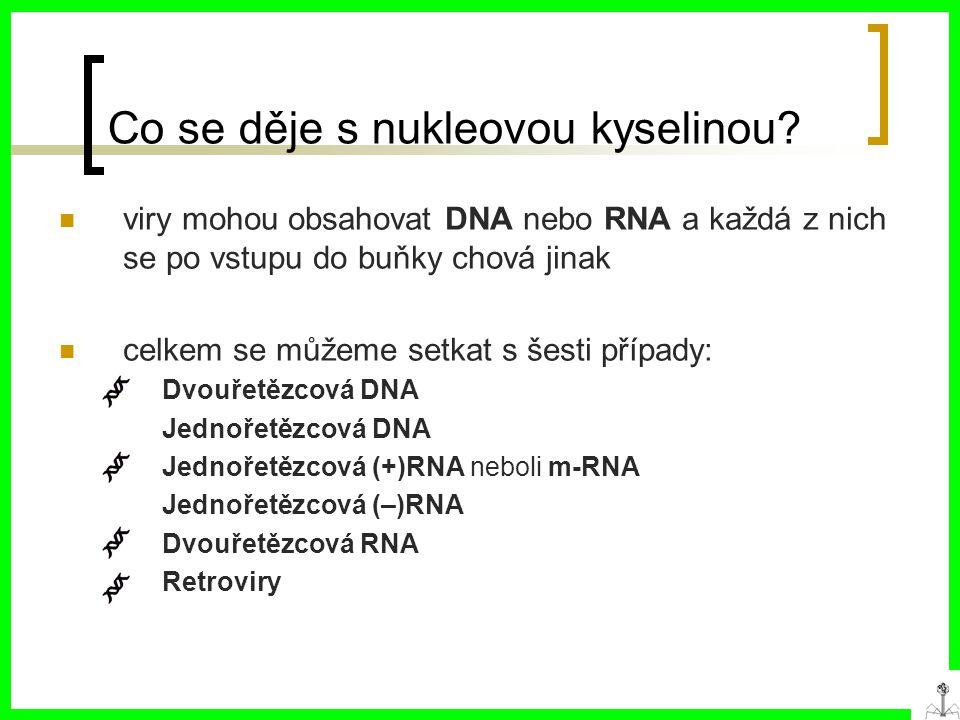 Co se děje s nukleovou kyselinou