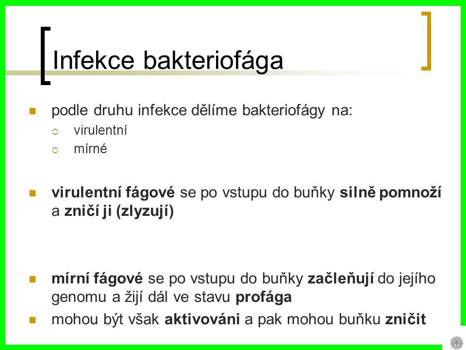 Infekce bakteriofága podle druhu infekce dělíme bakteriofágy na: