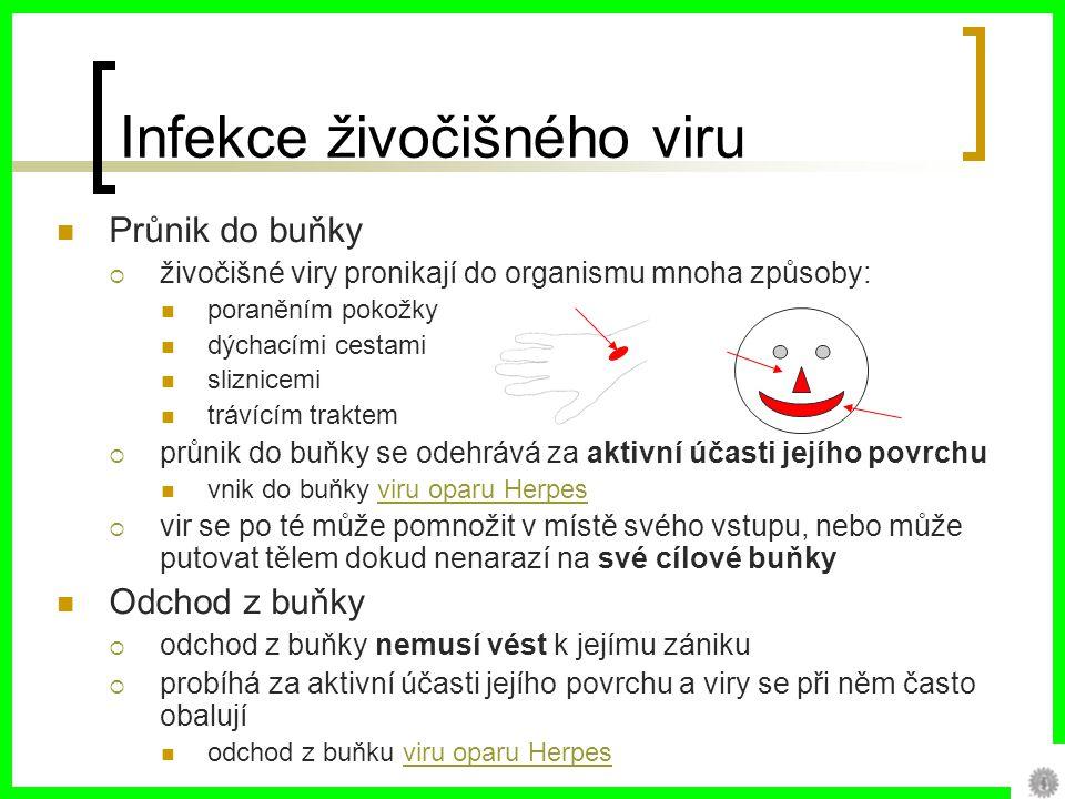 Infekce živočišného viru