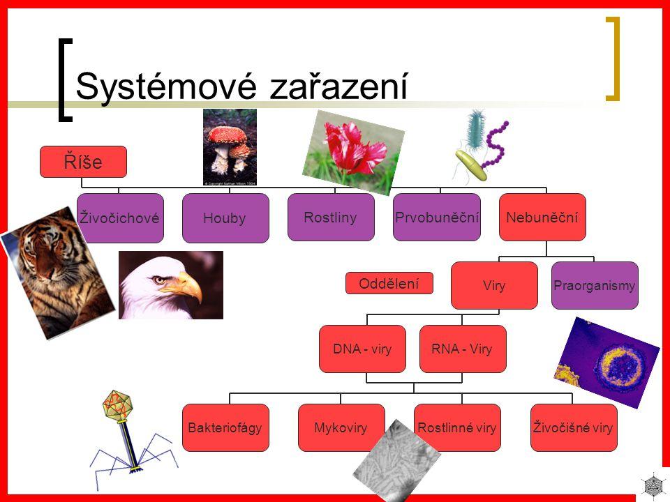 Systémové zařazení Říše Živočichové Houby Rostliny Prvobuněční