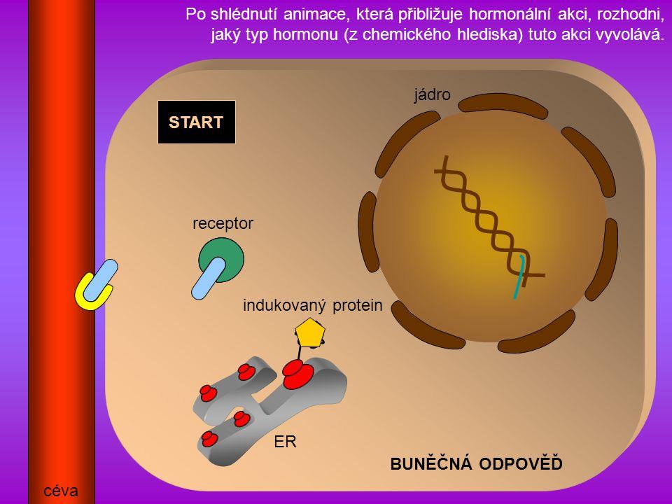 Po shlédnutí animace, která přibližuje hormonální akci, rozhodni, jaký typ hormonu (z chemického hlediska) tuto akci vyvolává.