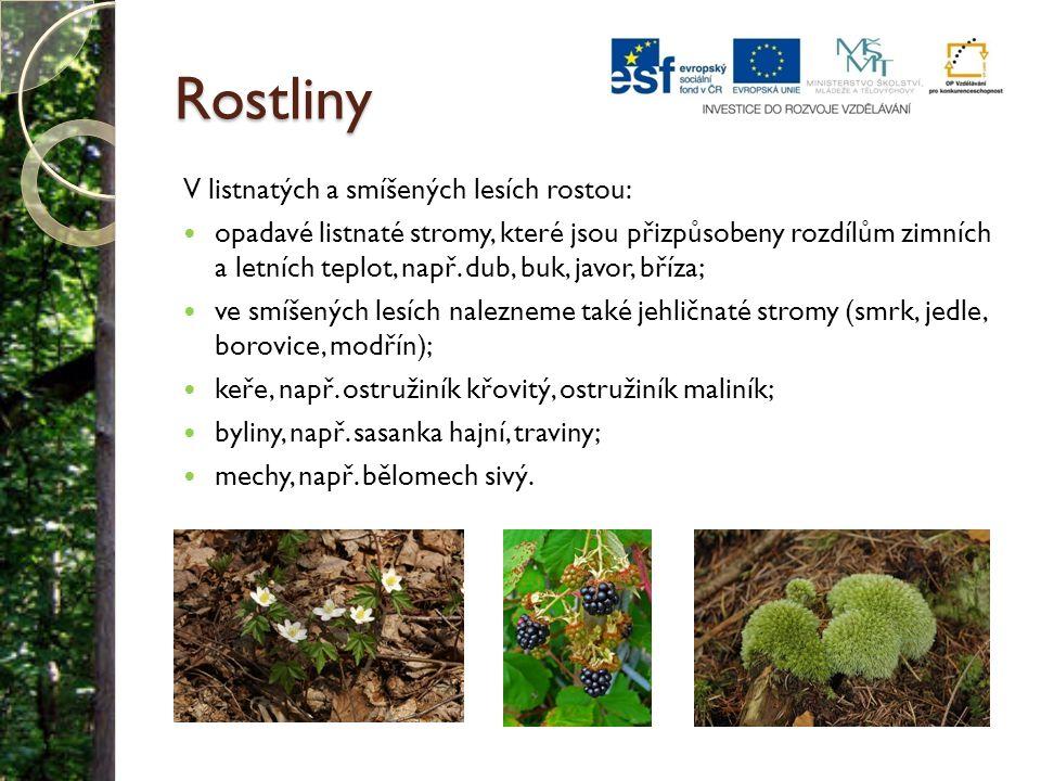 Rostliny V listnatých a smíšených lesích rostou: