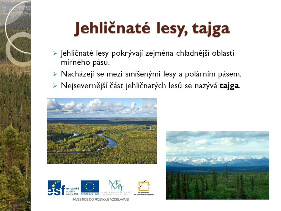 Jehličnaté lesy, tajga Jehličnaté lesy pokrývají zejména chladnější oblasti mírného pásu. Nacházejí se mezi smíšenými lesy a polárním pásem.