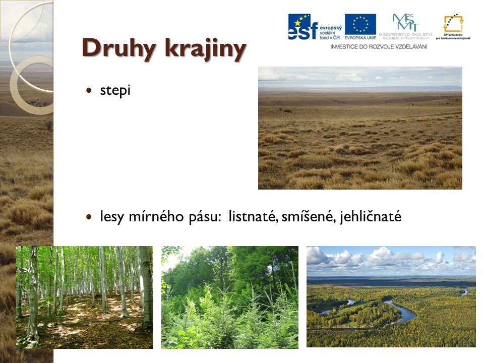 Druhy krajiny stepi lesy mírného pásu: listnaté, smíšené, jehličnaté