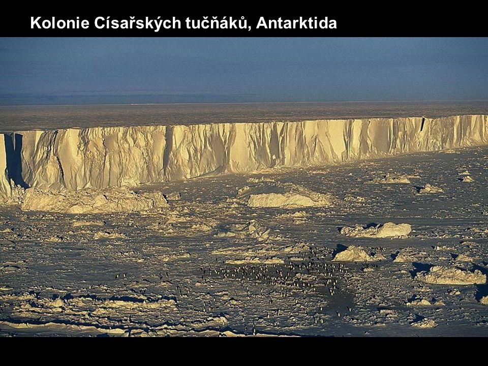 Kolonie Císařských tučňáků, Antarktida
