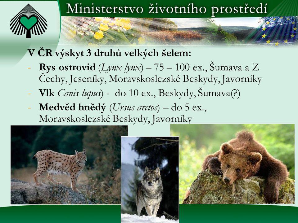 V ČR výskyt 3 druhů velkých šelem: