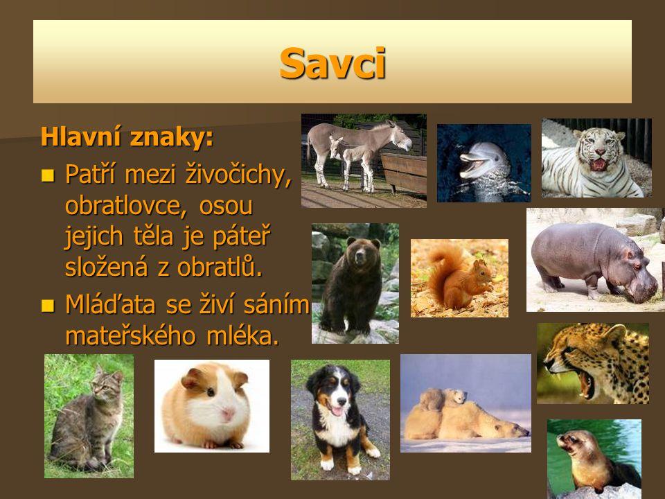 Savci Hlavní znaky: Patří mezi živočichy, obratlovce, osou jejich těla je páteř složená z obratlů.