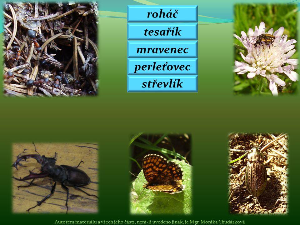 roháč tesařík mravenec perleťovec střevlík