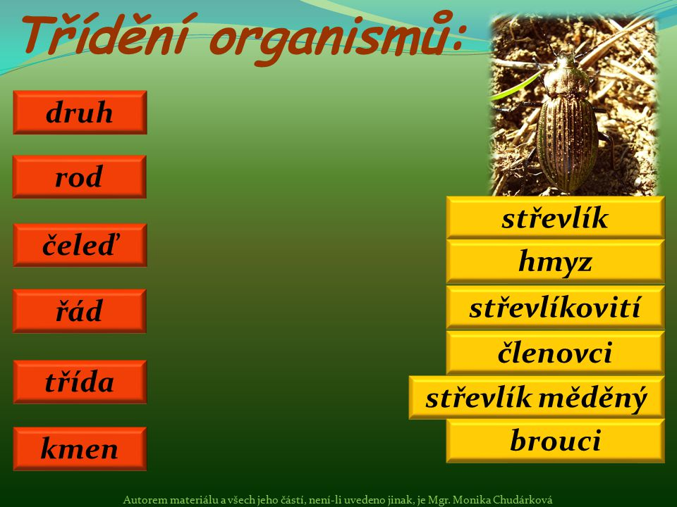 Třídění organismů: druh rod střevlík čeleď hmyz střevlíkovití řád