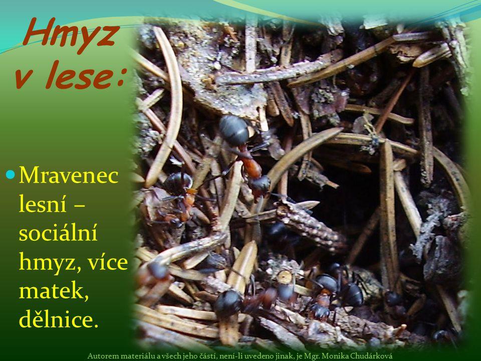 Hmyz v lese: Mravenec lesní – sociální hmyz, více matek, dělnice.