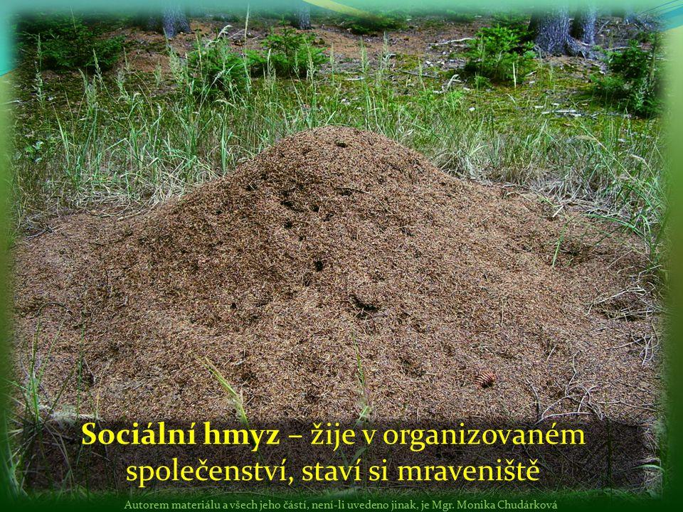 Sociální hmyz – žije v organizovaném společenství, staví si mraveniště