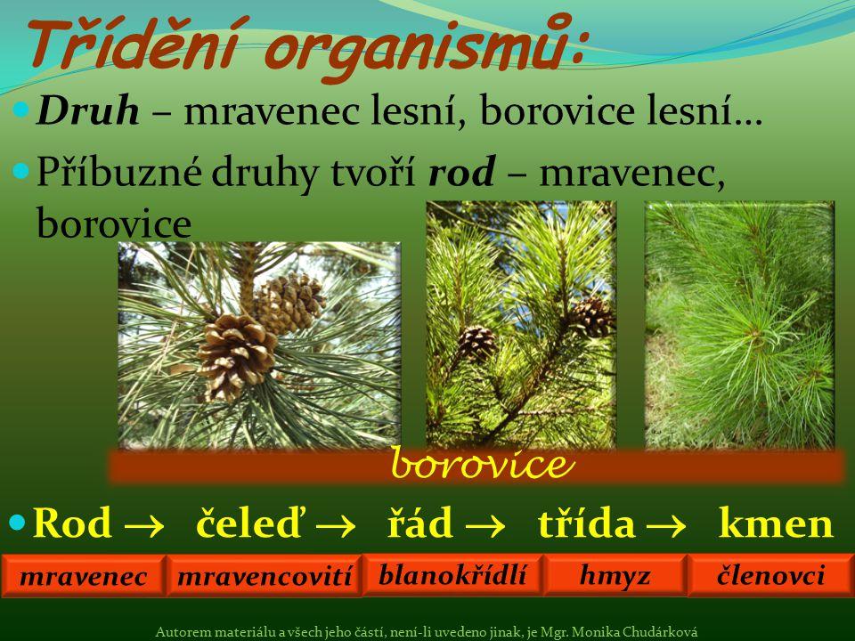 Třídění organismů: Druh – mravenec lesní, borovice lesní…