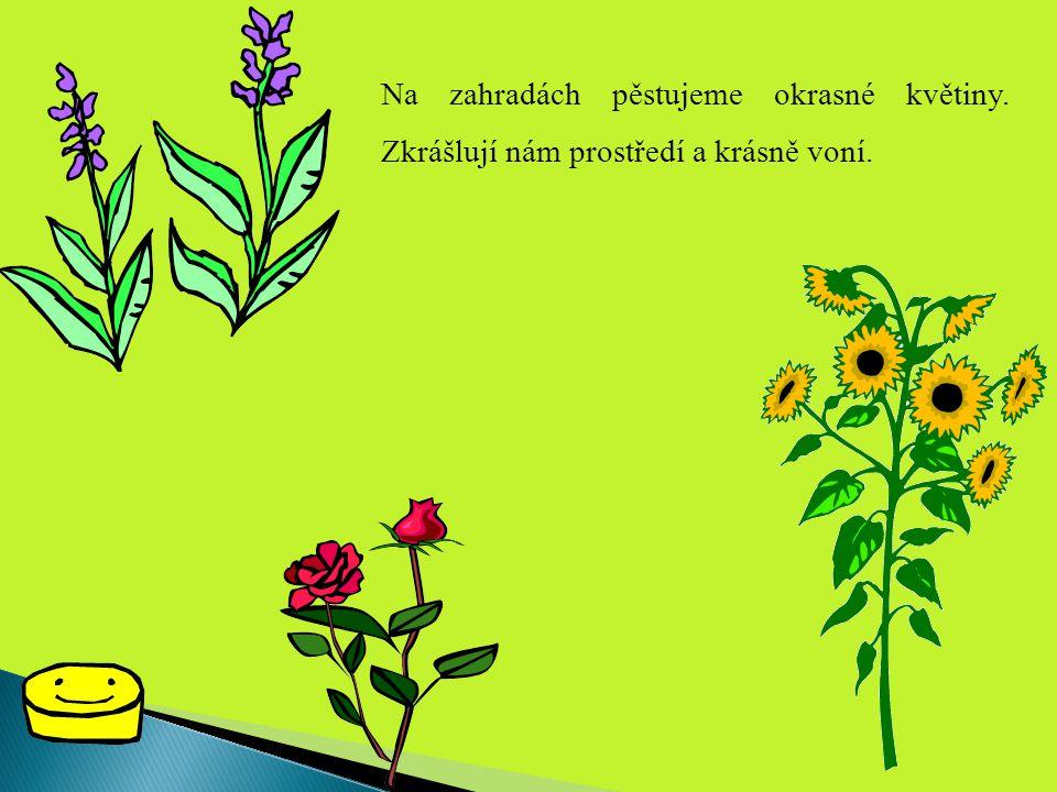 Na zahradách pěstujeme okrasné květiny