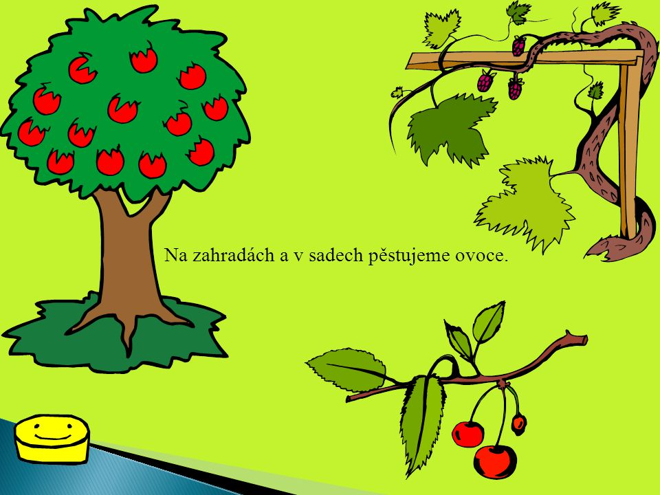 Na zahradách a v sadech pěstujeme ovoce.