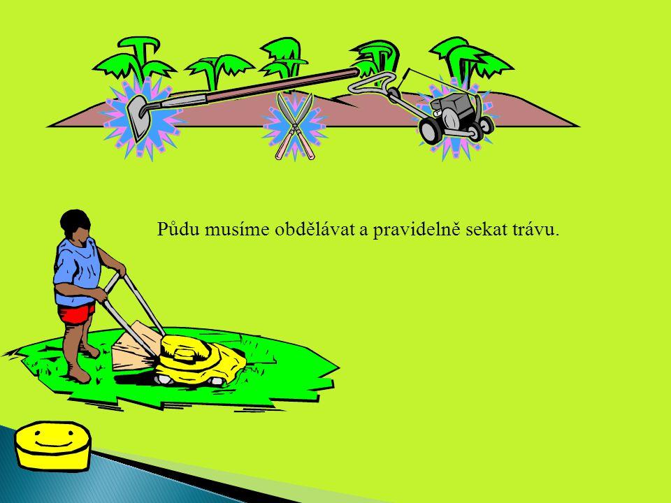 Půdu musíme obdělávat a pravidelně sekat trávu.