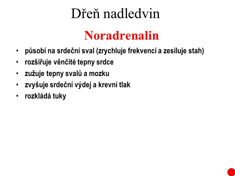 Dřeň nadledvin Noradrenalin