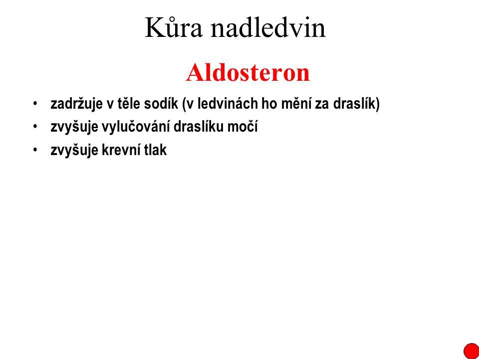 Kůra nadledvin Aldosteron