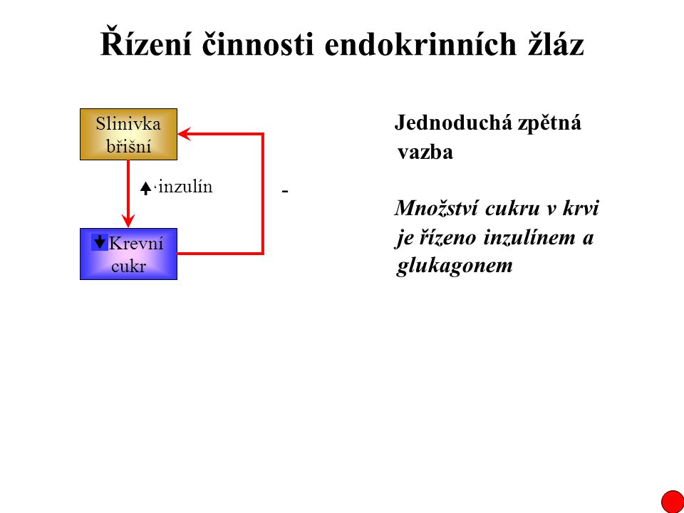 Řízení činnosti endokrinních žláz